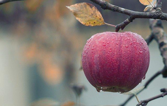 Благословение перед едой: знакомство с талмудической темой