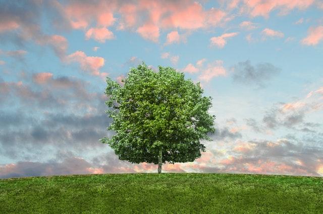 Плод Древа Познания